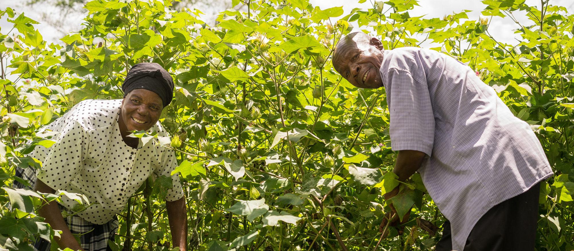 En kvinna och en man står böjda över sina grödor samtidigt som de leende tittar in i kameran.