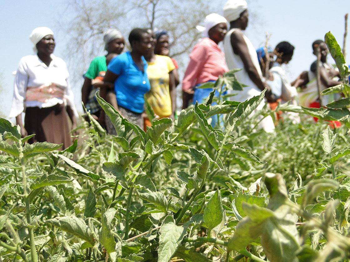 Några kvinnor skymtar bakom frodiga gröna växter i förgrunden.