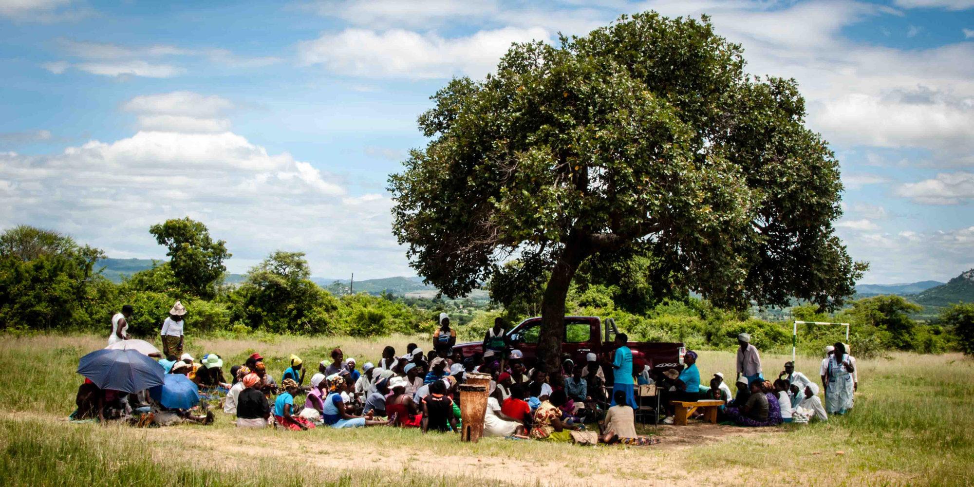En stor grupp kvinnor sitter under ett grönskande träd.