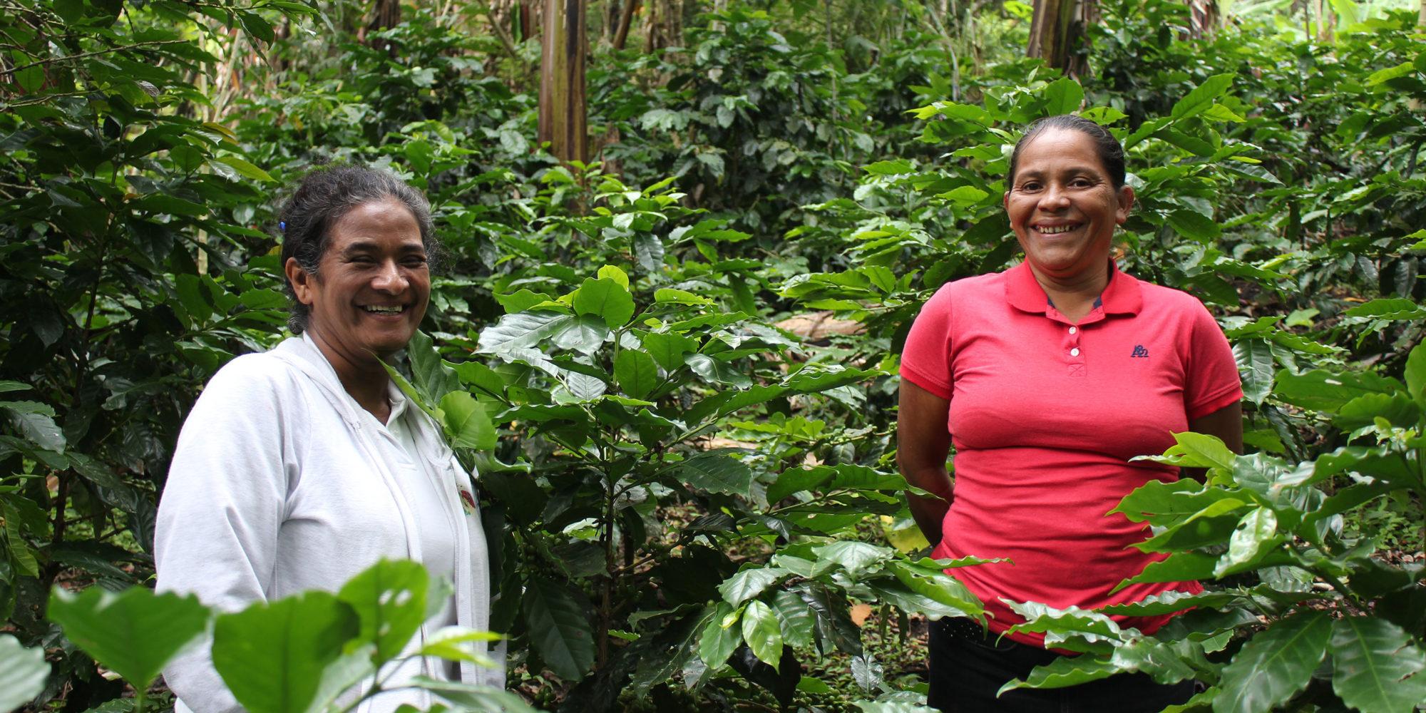 Två kvinnor står bland grönskande kaffebuskar och tittar leende in i kameran.
